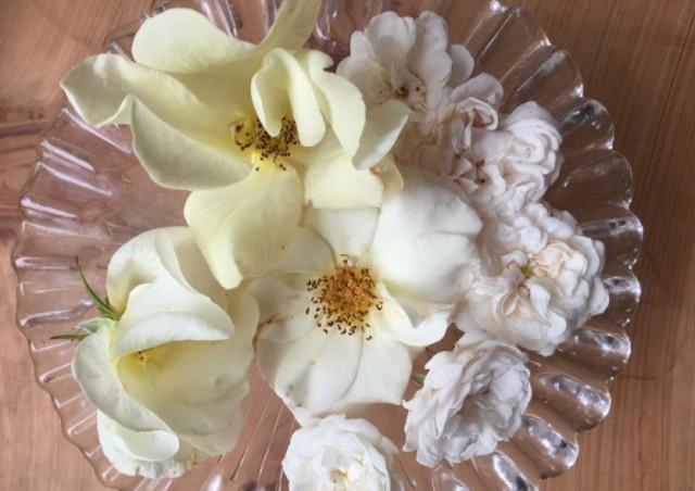 食用バラの育て方を学ぶなら【株式会社バラの学校】へ