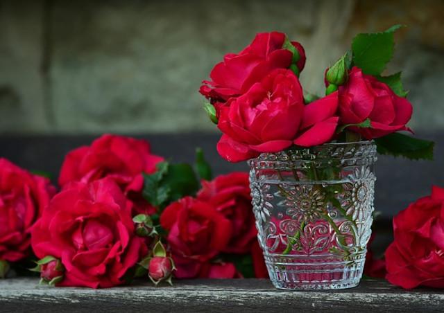 美しいバラには棘がある…その理由とは?
