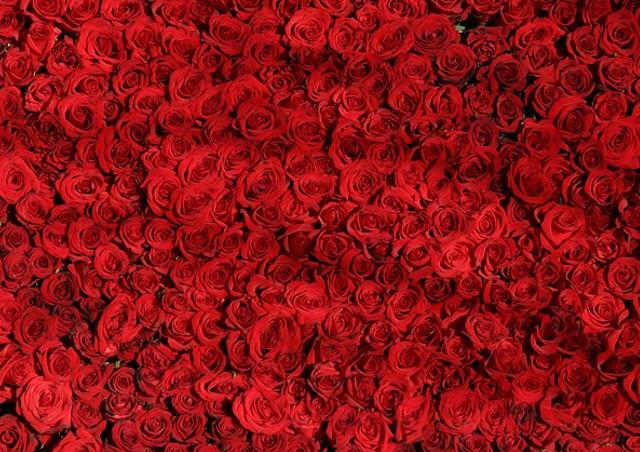 色や本数で異なるバラの花言葉