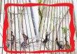 画像2: ゴスペル【食用バラ】食べる薔薇 超大輪・濃ピンク色・ダマスクローズ 送料無料【栽培地山形】 (2)