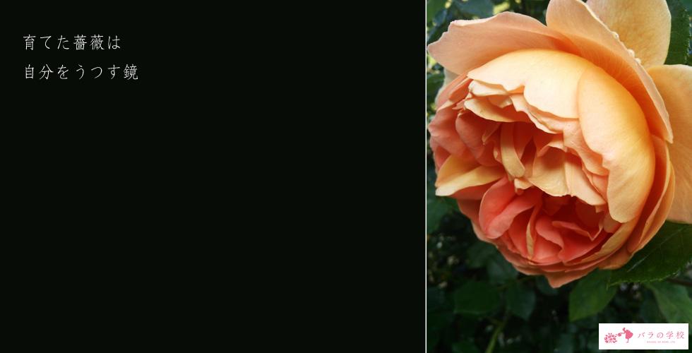 お茶やエイジングケアに役立つ商品を通販でお求めなら【株式会社バラの学校】 | 育てた薔薇は自分をうつす鏡