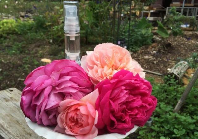 バラを栽培する方法に興味をお持ちの方は【株式会社バラの学校】へ